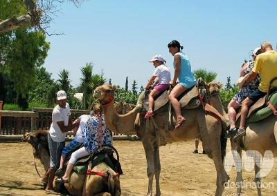 Relax & See Camel Park Mazotos